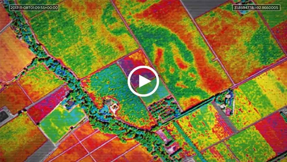 Leveraging AI to study the effects of climate change